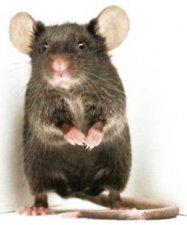 Мишка за всеки