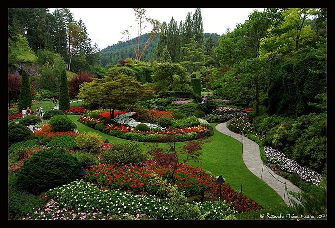 Парк алея градина цветя растения