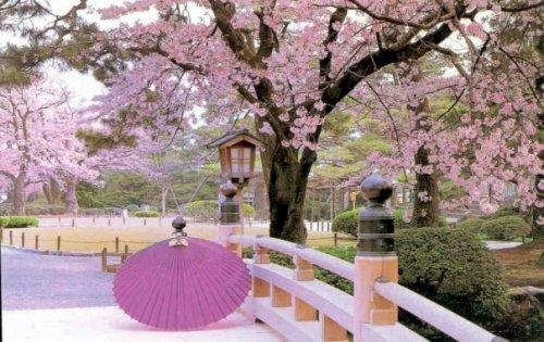 вишневи цветове в Япония