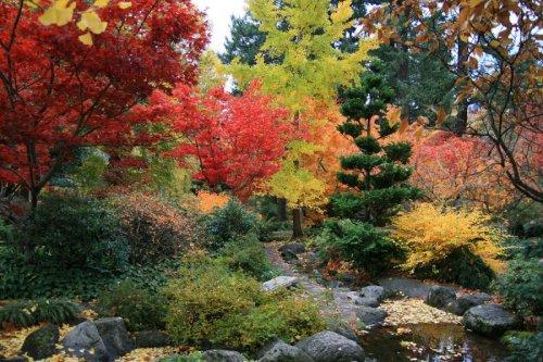 японска градина през есента