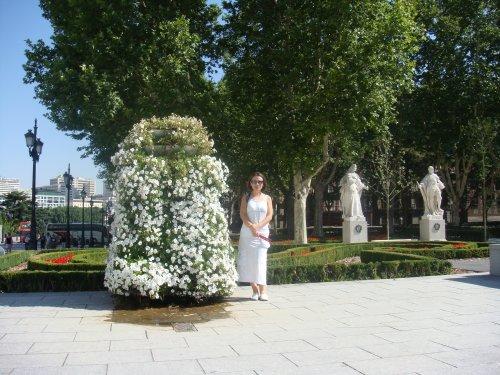 каскадни петунии- Мадрид