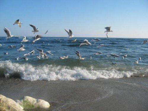 Снимка лято и море 13 sibir bg